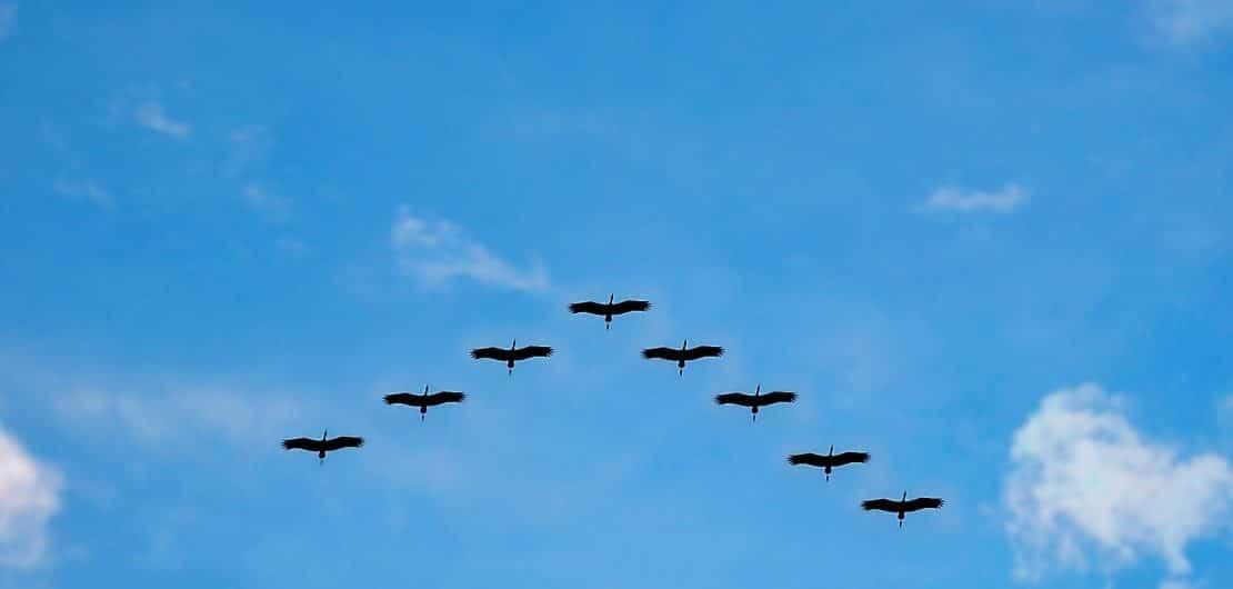 migrating birds blue sky